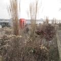 perenne-hindenburgufer-02